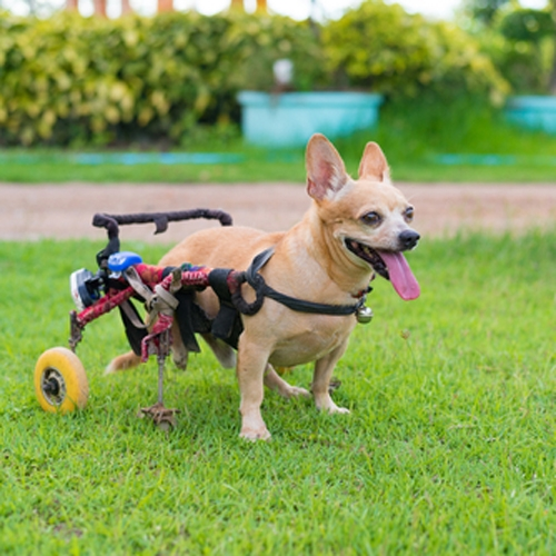 Petra's Dog Resource Center - Special Needs Boarding