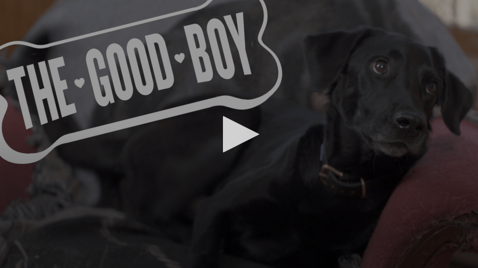 Petra's Dog Resource Center - Blog Good Boy