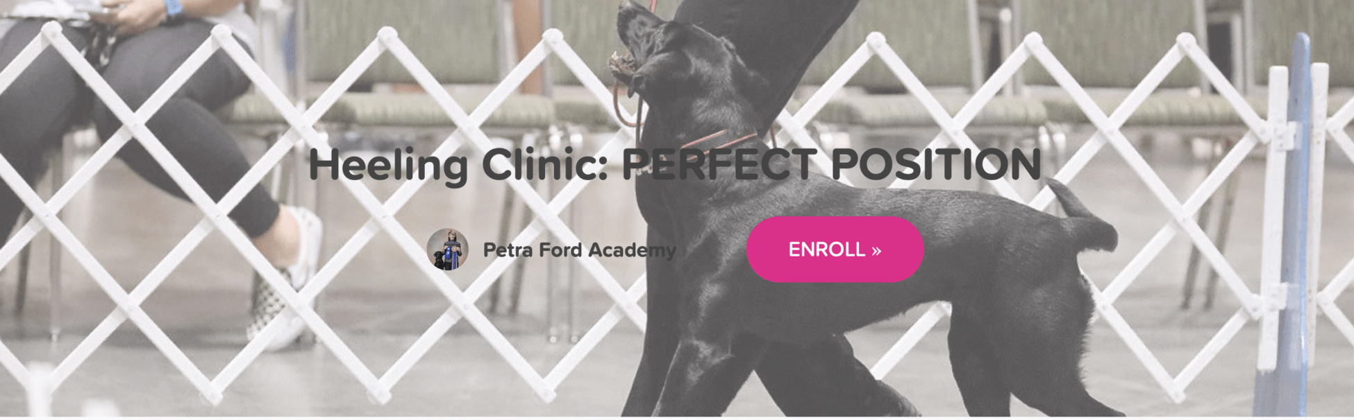 Petra's Dog Resource Center - Blog-New Online Course: Heeling Clinic