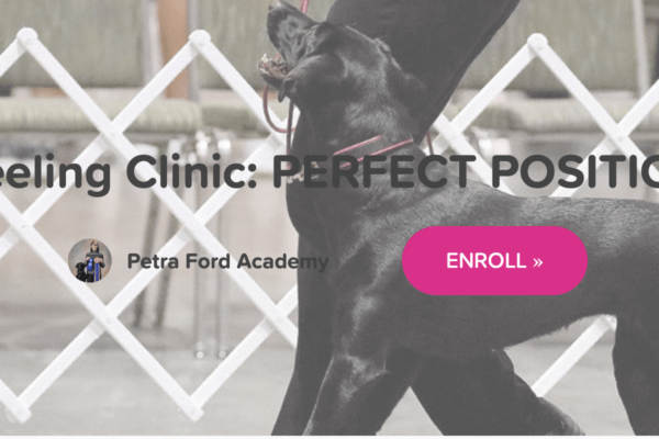 Petra's Dog Resource Center - Blog-New Online Course: Heeling Clinic