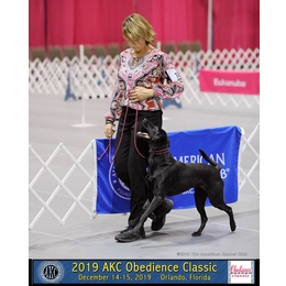 Petra's Dog Resource Center - Webinars | Online Courses | memberships Focus and Flow in the Ring