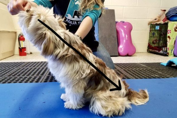 Petra's Dog Resource Center - Free Videos