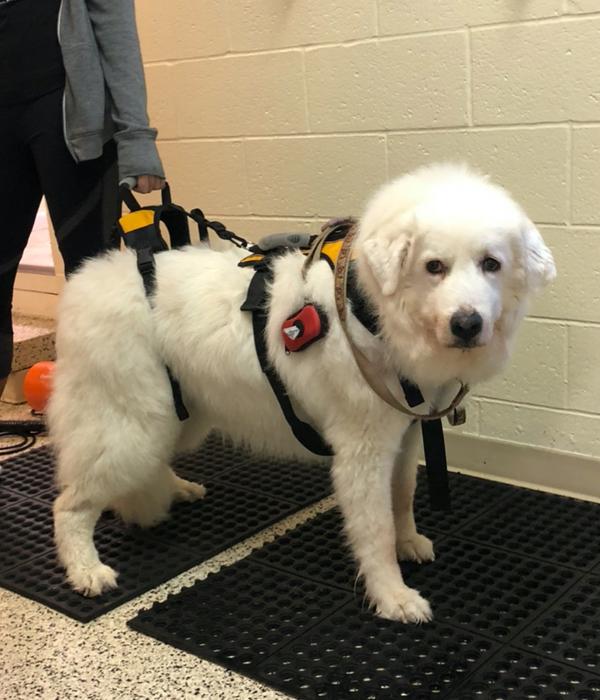 Petra's Dog Resource Center NJ - Senior Dogs