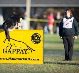 Competition Jumping for IGP Webinar Beth Bradley Petra's Dog Resource Center NJ