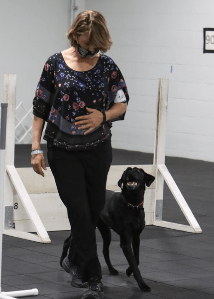 Canine Online Obedience lessons in NJ